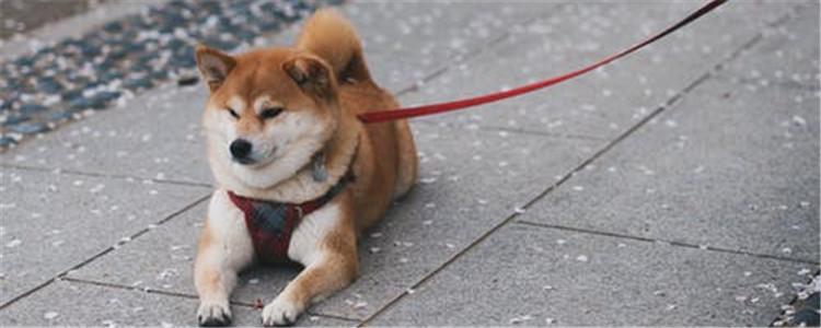 狗狗扭伤了怎么办 教你四个急救措施