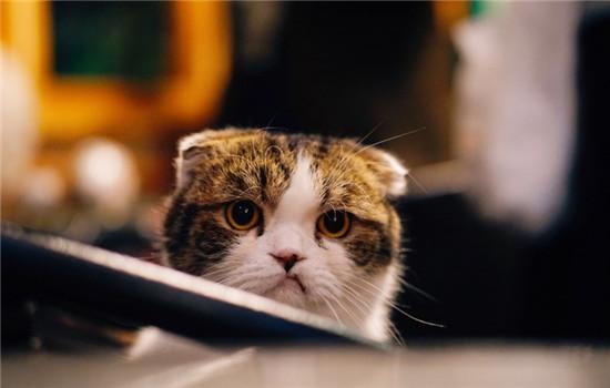 小猫不排便怎么办 训练小猫排便要注意什么