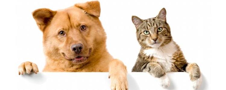 狗卵磷脂的作用是什么 肥胖的狗狗可以吃卵磷脂吗