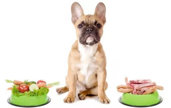 狗狗食物中毒怎么办 这些紧急措施要记住-轻博客
