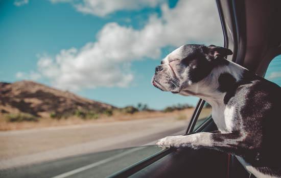 狗狗中毒了用什么办法可以解毒 狗不同中毒情形的应急处理-轻博客