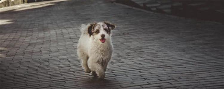 如何预防狗狗皮肤病 以下五种方法教给您