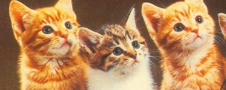 母猫不绝育的危害 母猫常见的妇科疾病