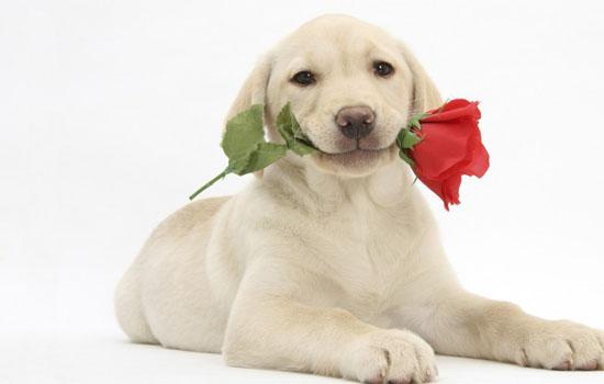 夏天狗狗降温诀窍 炎炎夏日五招让狗狗避暑降温插图