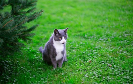 怎样给猫驱蚊 驱蚊产品对猫咪有损害吗插图(2)