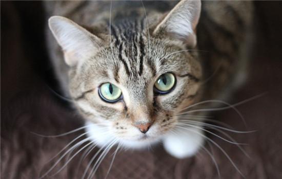 为什么猫喜爱摸头 猫咪爱摸头的原因有哪些插图