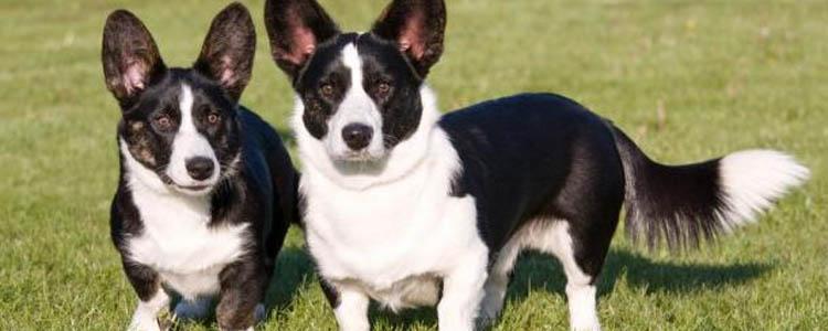 狗外伤用啥消炎药 人的消炎药可以给狗狗用吗