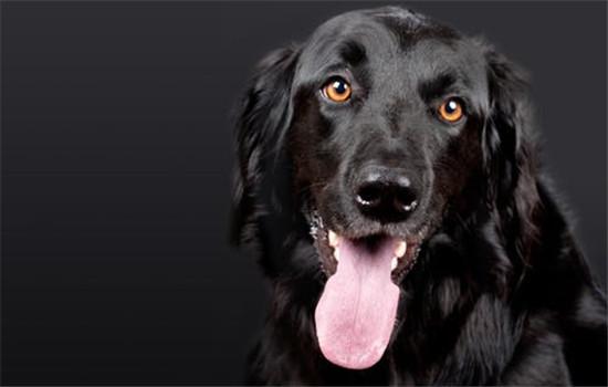 怎样给狗狗避暑 三个小办法教给你插图