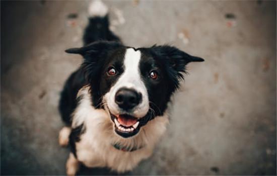 怎样给狗狗避暑 三个小办法教给你插图(1)