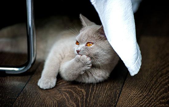 10kg猫粮怎样贮存 储粮桶、真空分装未必安全插图(2)