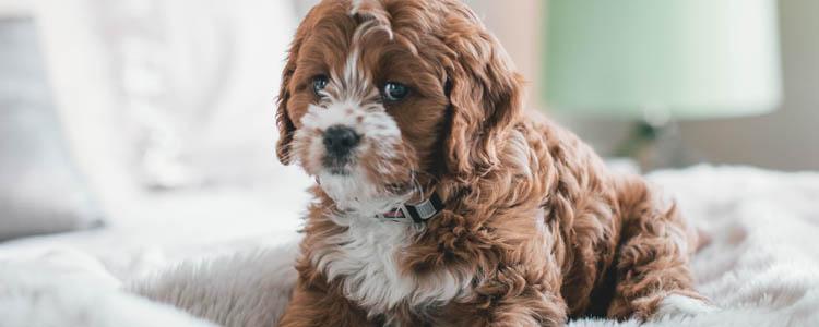 狗狗杀虫用什么药 怎么给狗狗驱虫什么药效果好