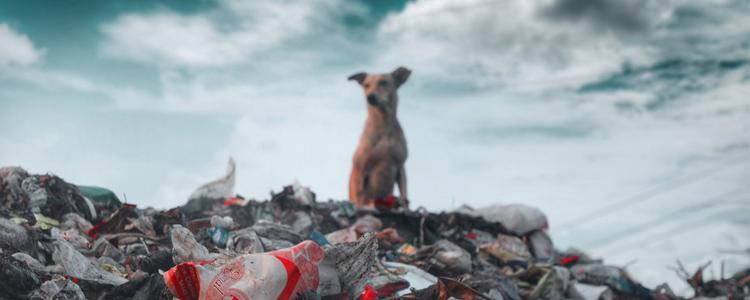 狗狗体外驱虫怎么驱 最全犬体外寄生虫驱虫手册