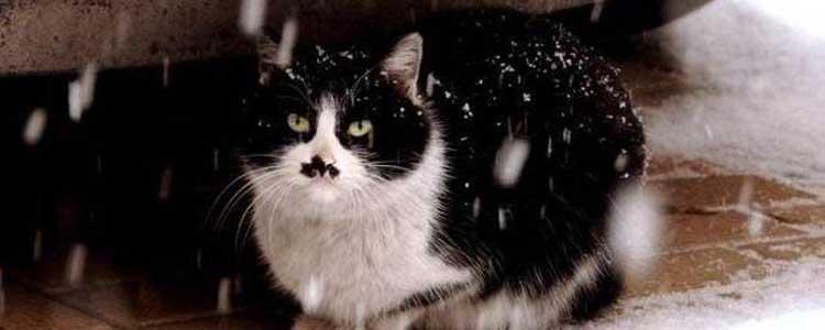 为什么流浪猫耳朵有缺口 并不是因为打架或虐待哦