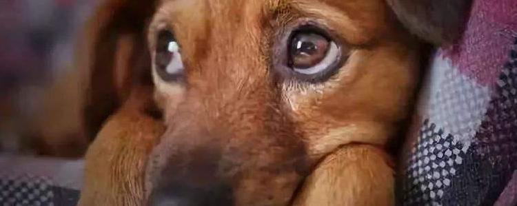 狗狗经常发抖,是不是太冷了?