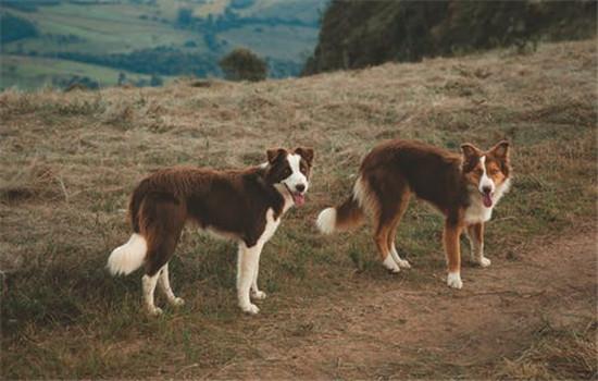狗有狂犬病的症状 狗狗出现这些症状最好远离-轻博客