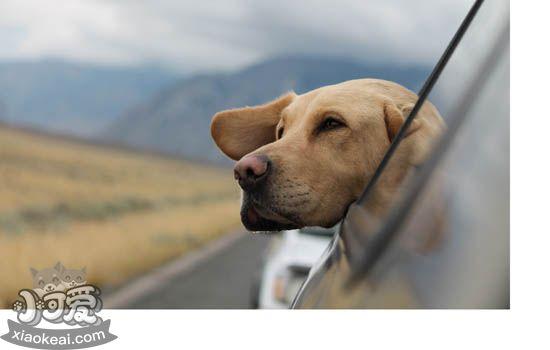 狗狗夏天游水要注意什么 狗狗夏日游水必备守则插图
