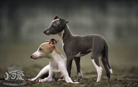 狗狗夏天游水要注意什么 狗狗夏日游水必备守则插图(1)