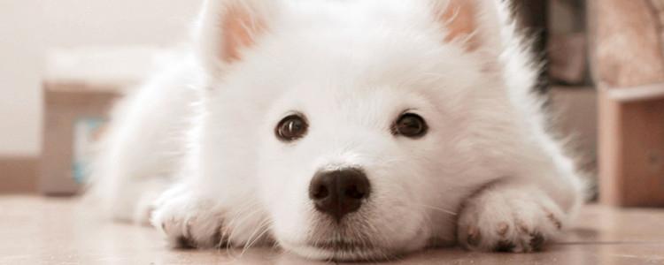 狗狗过敏性皮炎的症状 该用什么药