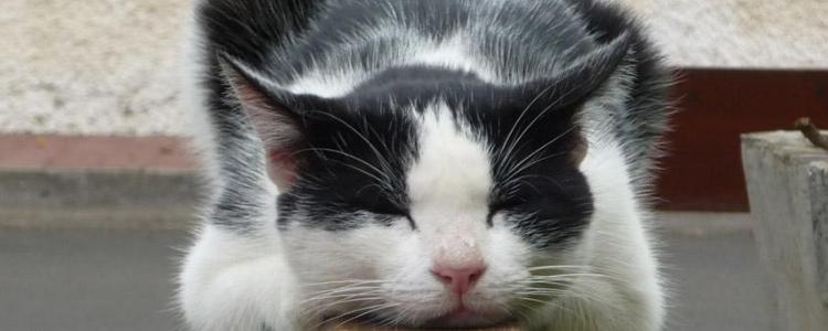 怎么帮助猫排毛球 猫咪排毛球真的要改善啦