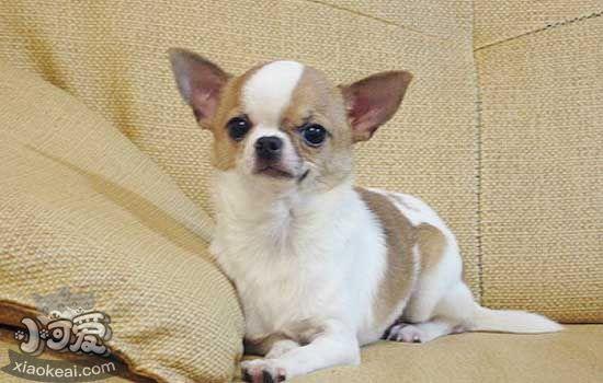 狗狗发热症状 关于狗狗伴随发热的几种症状的鉴别-轻博客