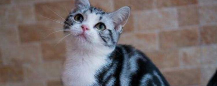 猫咪结膜炎和猫鼻支的区别 其实就是猫鼻支的前兆啊!