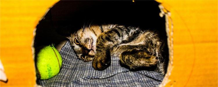猫咪夭折是为什么 导致猫崽夭折的原因有哪些