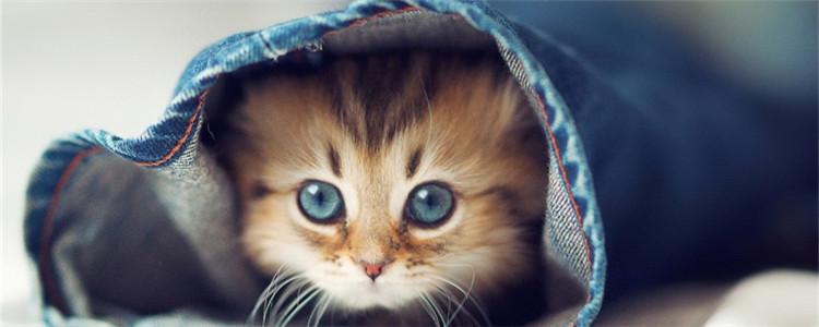 小猫眼睛变色 是猫咪得了眼部疾病吗