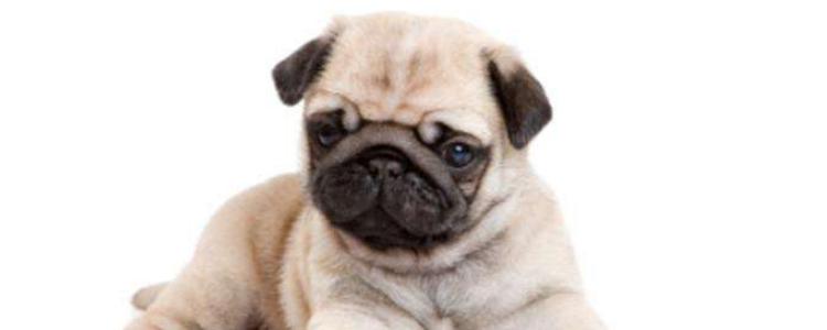 卵磷脂含激素吗 这种含有激素的东西你也敢给狗狗用啊!
