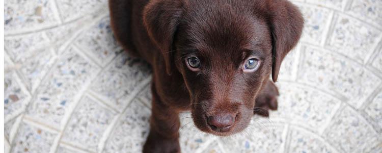 狗狗尿路结石怎么治疗 狗狗尿路结石怎么办