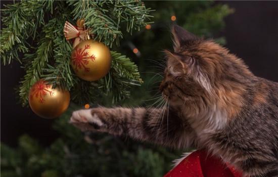 猫咪吃塑料袋多久分泌 猫咪不分泌的话怎么办插图