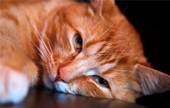 猫咪吃塑料袋多久分泌 猫咪不分泌的话怎么办插图(2)