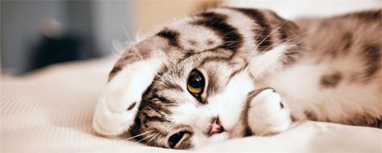 猫下泌尿道疾病是什么 猫泌尿道出现问题的症状是什么