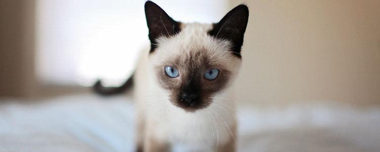 被猫抓需要打狂犬疫苗吗 关于狂犬疫苗你不了解的事