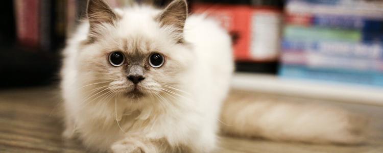 被猫抓需要打几针 狂犬疫苗并不是只有一针