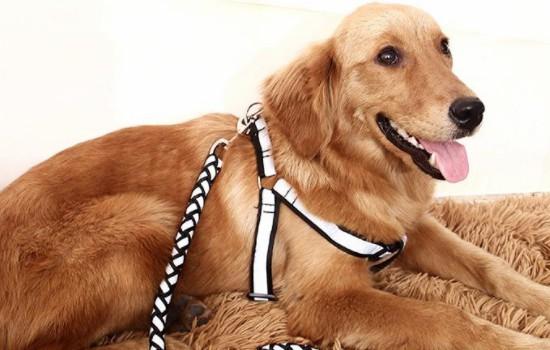 狗狗发烧有什么症状 主人要随时留意狗狗的状况哦插图