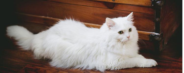 猫咪怀孕吃什么比较好 营养过剩可能导致难产