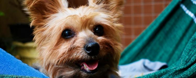 如何纠正狗狗爱扑人 训练狗狗不扑人的干货知识