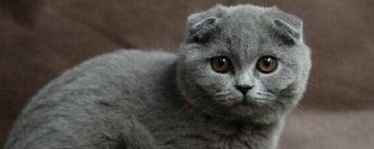 猫胰腺炎是怎么引起的 猫咪胰腺炎的症状