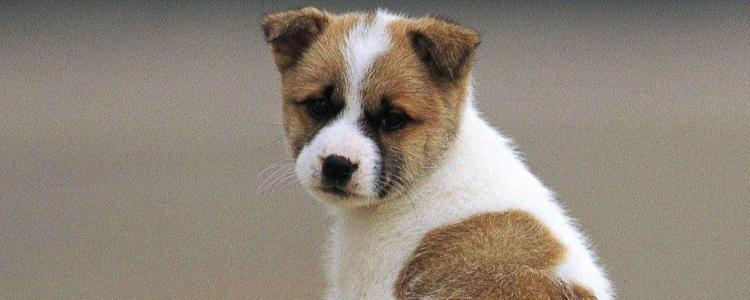 狗狗异物卡住怎么办 观察狗狗很重要