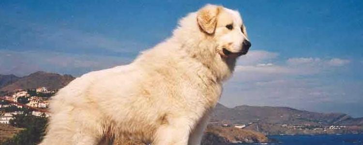 狗狗会患癌症吗 如何降低狗狗患上癌症的几率?