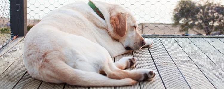狗狗会做梦么 狗狗做梦的表现有哪些