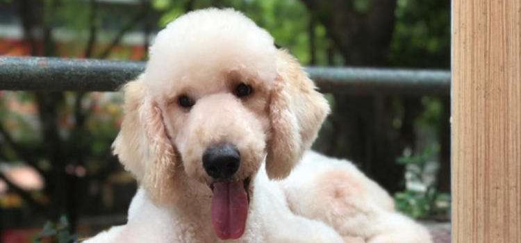 狗狗感冒症状 该如何治疗