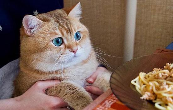 猫嘴巴溃疡怎么办 这几个办法能够试试插图(2)