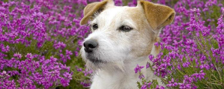 狗拉稀是什么原因 狗狗腹泻的原因大全