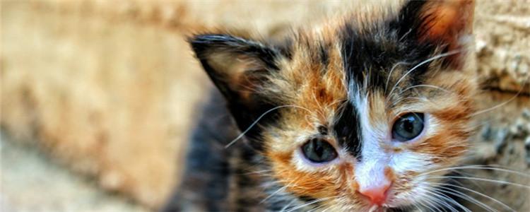 怎么训练幼猫听话 训练幼猫要持之以恒
