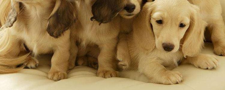 狗狗有多少颗牙齿 狗狗牙齿磨损程度怎么看?
