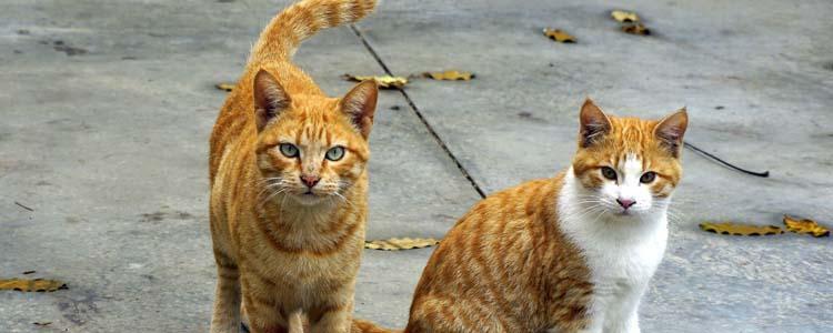猫咪流口水的原因是什么 猫咪流口水的因素