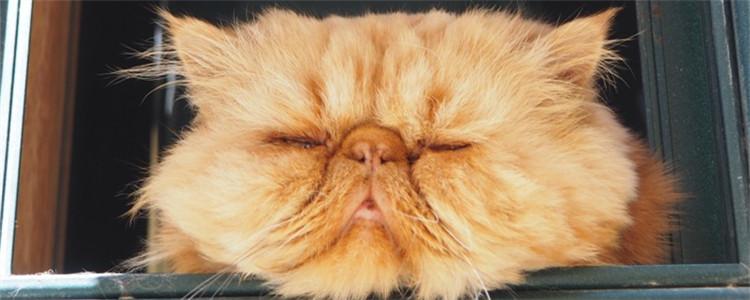 猫病毒性鼻气管炎是什么 猫病毒性鼻气管炎的传播途径有哪