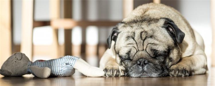狗得肺炎是什么引起的 肺炎的形成原因分为五种