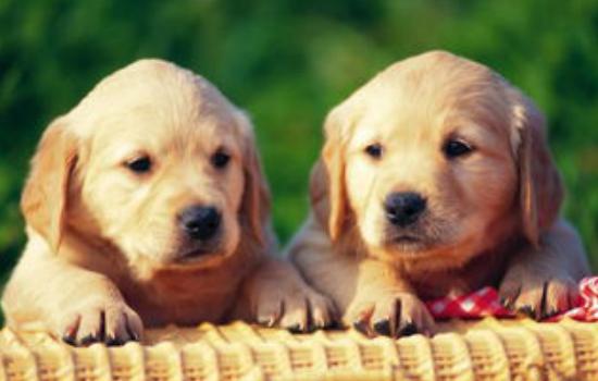 幼犬长途运送后拉肚子 运送途中是不是让狗狗害怕了?插图
